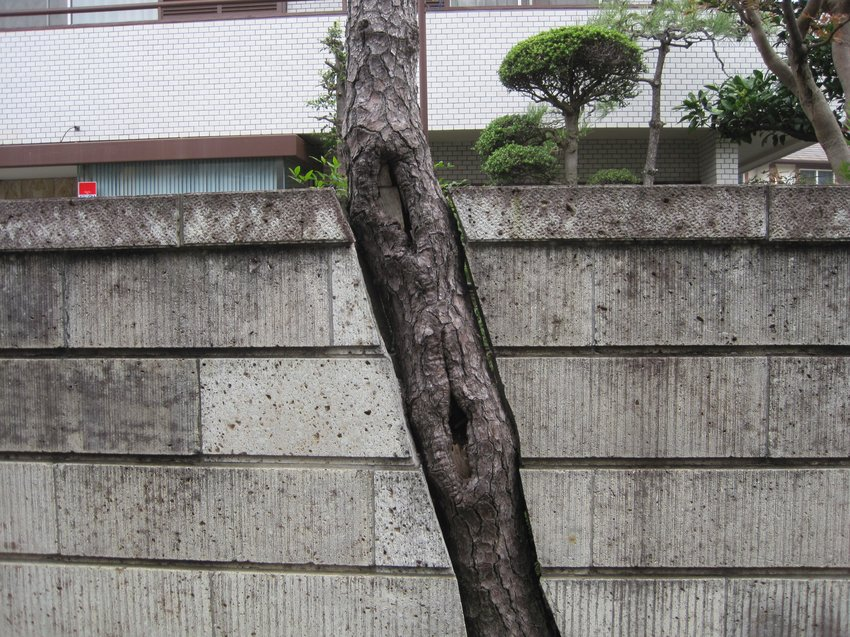 featuring kenji ichikawa